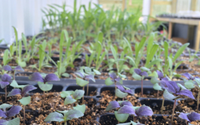 How to Care for Growing Seedlings