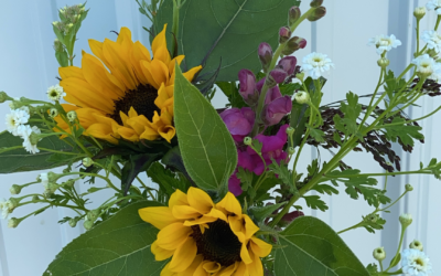 Cutting and Caring for your Fresh Cut Flowers